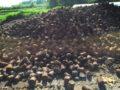廃菌床を堆肥化させて土と混ぜます
